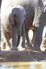 Elephants_Hide_Mashatu_Botswana0051