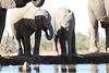 Elephants_Hide_Mashatu_Botswana0041