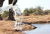 Mashatu Elephant with Attitude