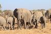 Elephant__Mashatu_Botswana0020