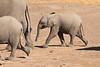 Elephant__Mashatu_Botswana0025