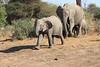 Elephant__Mashatu_Botswana0024