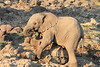 Elephant__Mashatu_Botswana0011