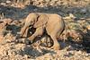Elephant__Mashatu_Botswana0010