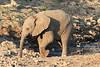 Elephant__Mashatu_Botswana0005