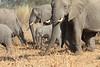 Elephant__Mashatu_Botswana0023