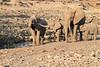 Elephant__Mashatu_Botswana0001