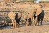Elephant__Mashatu_Botswana0007