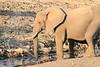 Elephant__Mashatu_Botswana0009