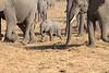 Elephant__Mashatu_Botswana0018