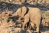 Elephant__Mashatu_Botswana0006