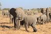 Elephant__Mashatu_Botswana0019