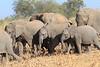 Elephant__Mashatu_Botswana0022