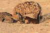 Hyena_Pups_Mashatu_Bots0106