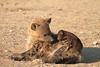Hyena_Pups_Mashatu_Bots0125
