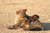 Hyena_Pups_Mashatu_Bots0129