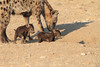 Young_Hyena_Pups_Mashatu_Botswana0046