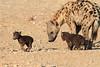 Young_Hyena_Pups_Mashatu_Botswana0053