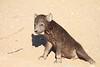 Young_Hyena_Pups_Mashatu_Botswana0092