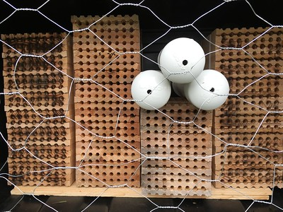 Mason Bee boxes and pvc tubes with new larva  in tubs