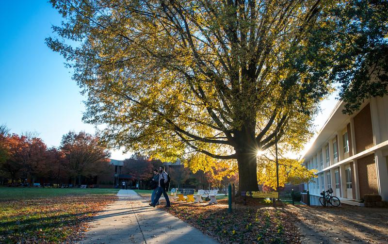 Fall Fairfax Campus