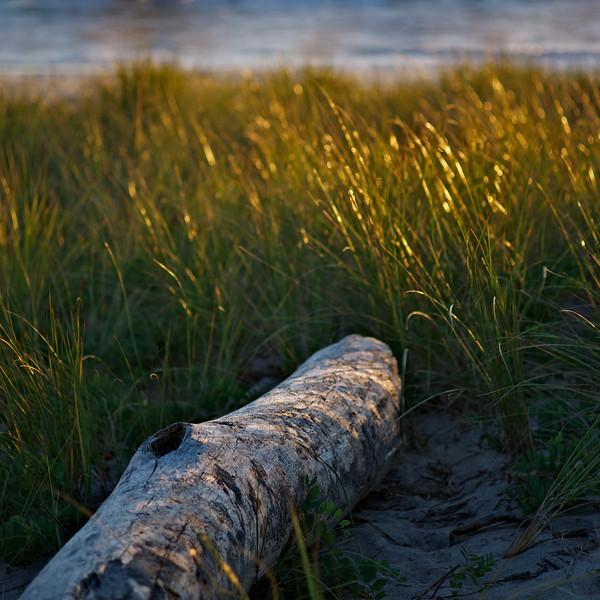 Beach Log, Philbin Beach