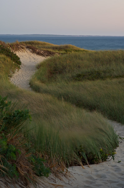 Wind in the Dune Grass