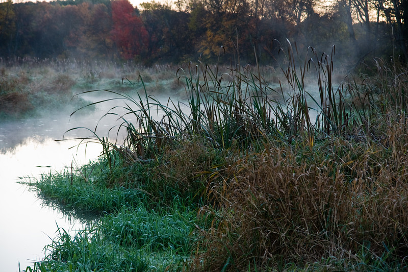 Mist at the waters edge