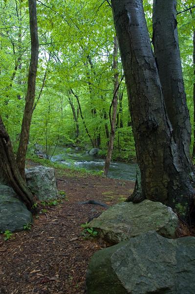 Quiet morning near Danforth brook