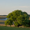 Tree on the Essex river