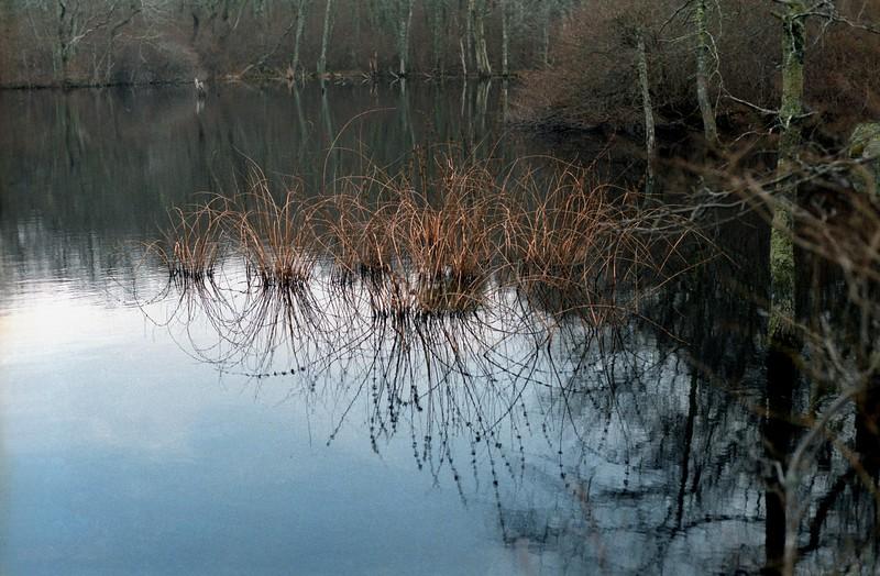 Reflection, Cedar Tree Neck