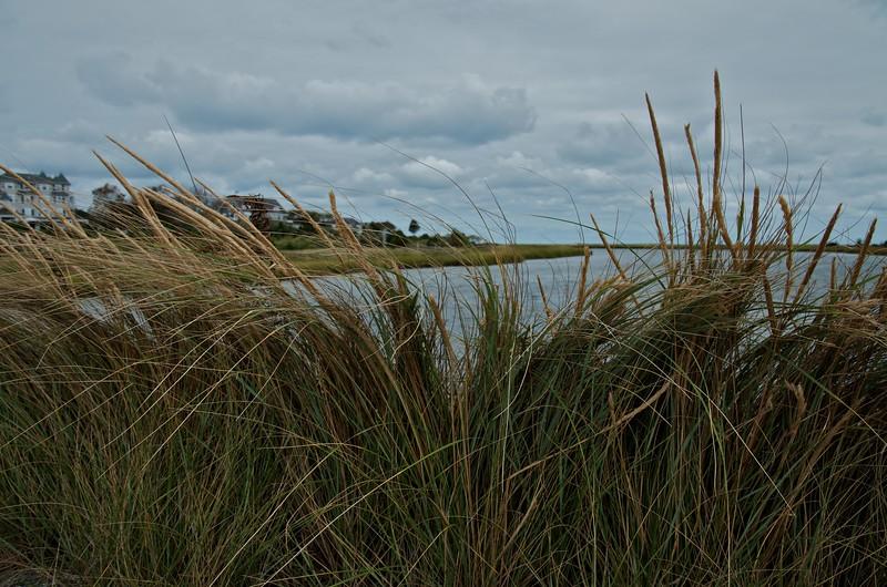 Beach Grass at the Lagoon