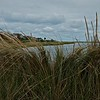 Beach Grass at the Lagoon