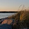 Evening Dune Grass