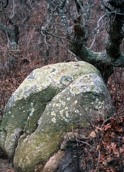 Winter, Tree and Rock