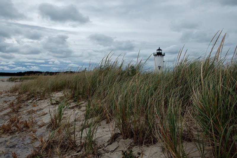Dune Grass and Light