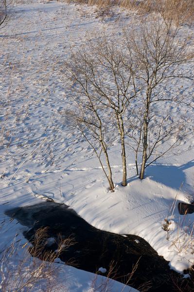 Great Meadows, Winter