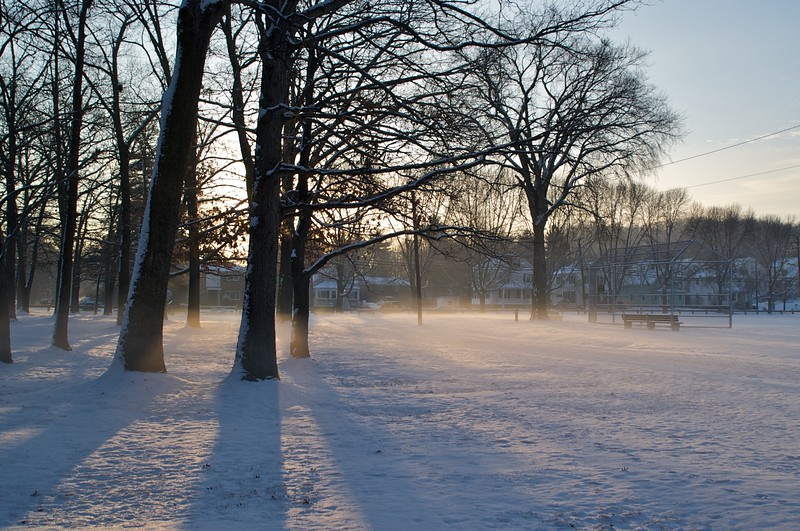 Misty Morning in Butterworth Park