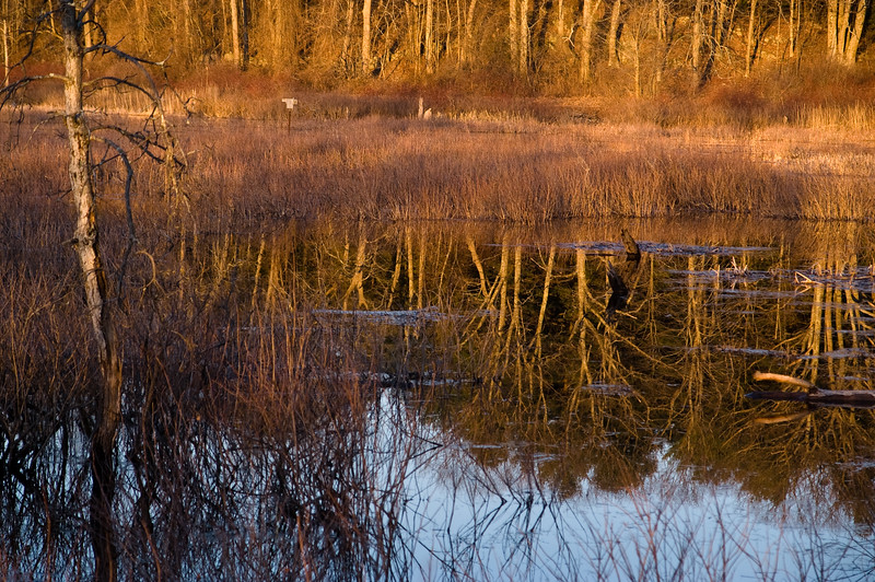 Morning light, Water Row