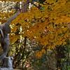 Autumn Eros