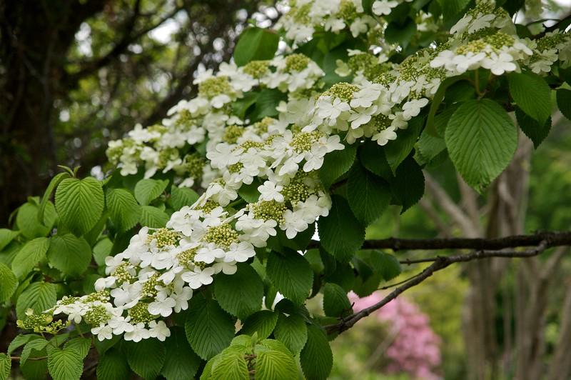 Spring Cream
