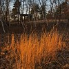 Winter Grass, Evening Light