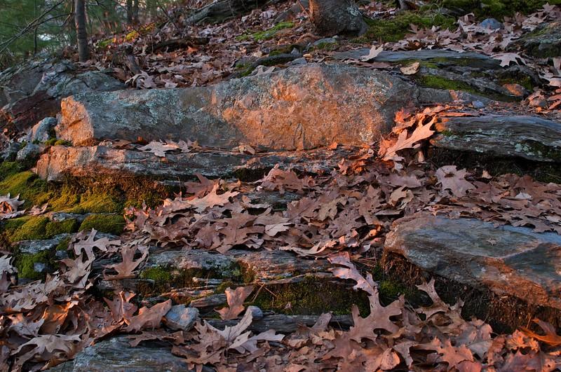 Late Light, Fallen Leaves