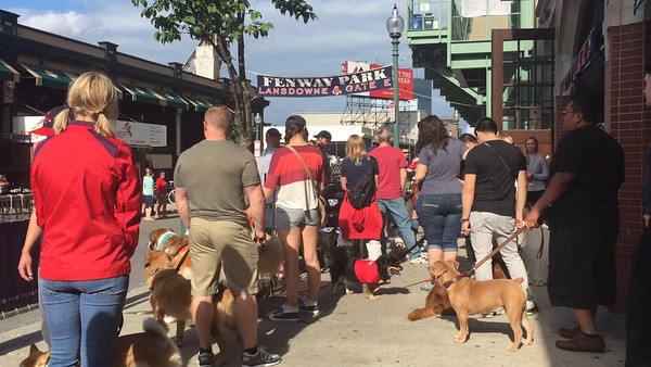 Dog Day at Fenway