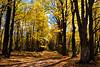 Fall at Quabbin