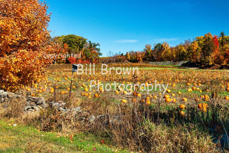 Foliage and Pumpkins