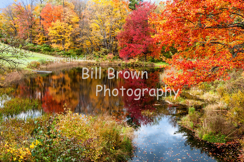 Fall Color and Reflections