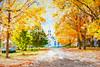 Fall in Petersham