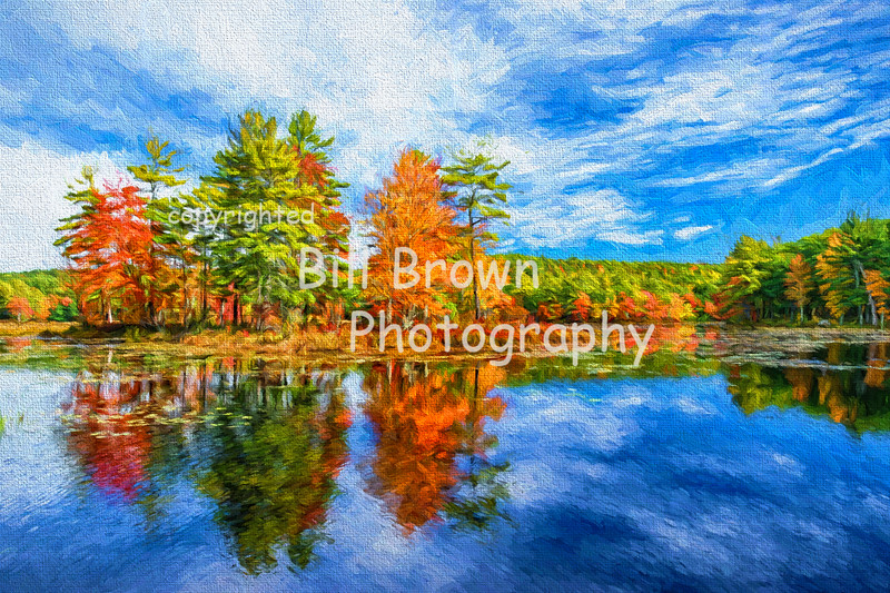 Harvard Forest Reflections