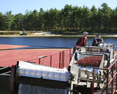 The cranberries are vacuumed up through a tube in the bog and up into this cleaner for a washing before dropping into the truck.